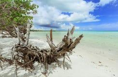 Überraschende einladende schöne Aussicht des wilden Strandes und Ozean gestalten gegen Hintergrund des blauen Himmels landschaftl Stockfoto