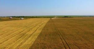 Überraschende Luftbewegung in Richtung zur großen starken Erntemaschine, die auf dem Weizengebiet funktioniert und Staub zurücklä stock video footage