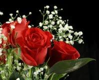Überraschende Rose Stockbild