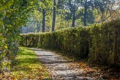 Überraschendes Bild eines Asphaltweges mit trockenen Blättern stockfoto