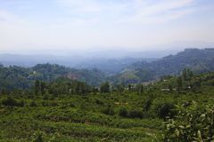 Überraschendes Sri Lanka lizenzfreies stockbild