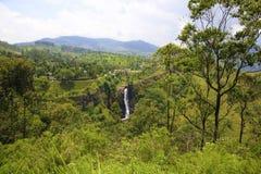 Überraschendes Sri Lanka stockbild