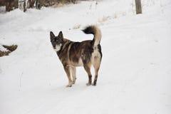 Überraschte den alten grauen Hund im Schnee Lizenzfreie Stockfotografie