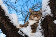 Überraschte Katze Stockbilder