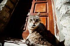 Überraschte Katze Stockbild