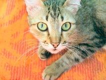 Überraschte Katze Stockfotografie