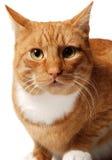 Überraschte Katze Stockfoto