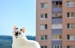 Überraschte Katze in der Stadt stockfotografie