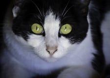 Überraschte Katze, die entlang ich anstarrt Lizenzfreie Stockfotos