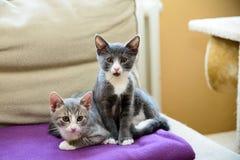 Überraschte Katzen lizenzfreies stockbild