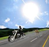 Überraschte Radfahrer-Verfolgung durch Jaguar auf Straße Stockfotos
