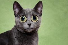 Überraschte silberne Katze Stockbild