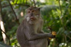 Überraschter Affe Stockfoto