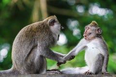 Überraschter Affe Stockfotos