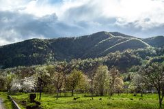 Überraschungslandschaft mit grünem Gras, Hügeln und Bäumen, bewölkter Himmel stockfoto