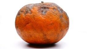 Überreifes orange Drehen u. Pause stock video footage