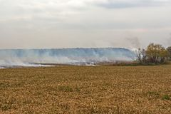Überreste der Landwirtbrandstiftung nach der Ernte von Mais, die die Tötung von Mikroorganismen ergaben, sowie kleine Tiere und R lizenzfreies stockfoto
