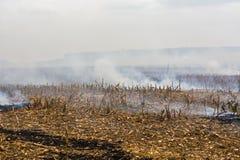 Überreste der Landwirtbrandstiftung nach der Ernte von Mais, die die Tötung von Mikroorganismen ergaben, sowie kleine Tiere und R stockfoto