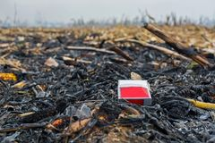 Überreste der Landwirtbrandstiftung nach der Ernte von Mais, die die Tötung von Mikroorganismen ergaben, sowie kleine Tiere und R lizenzfreie stockfotografie