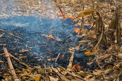 Überreste der Landwirtbrandstiftung nach der Ernte von Mais, die die Tötung von Mikroorganismen ergaben, sowie kleine Tiere und R stockbilder