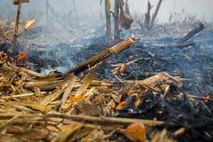 Überreste der Landwirtbrandstiftung nach der Ernte von Mais, die die Tötung von Mikroorganismen ergaben, sowie kleine Tiere und R lizenzfreies stockbild