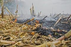 Überreste der Landwirtbrandstiftung nach der Ernte von Mais, die die Tötung von Mikroorganismen ergaben, sowie kleine Tiere und R lizenzfreie stockbilder