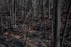 Überreste des dichten Waldes nach Feuer Lizenzfreies Stockfoto