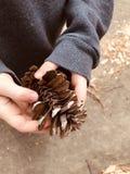 Überreste von einem Pinecone stockfotos
