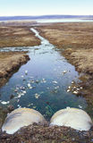 Überschüssige Rohre, die Meer beschmutzen Lizenzfreie Stockfotografie