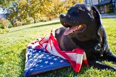 Überschrift Labrador Lizenzfreies Stockfoto