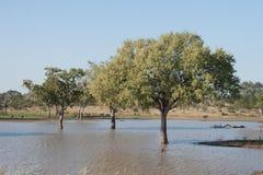 Überschwemmte Bäume Lizenzfreies Stockbild