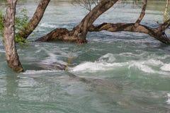 überschwemmte Bäume Stockfotografie