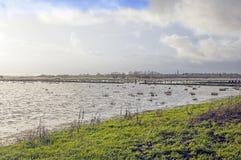 Überschwemmte Bauernhoffelder Somerset England Stockfotos