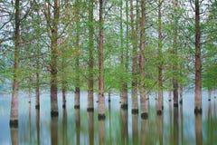 Überschwemmte Baumlandschaft am Frühjahr Glattes Wasser Lizenzfreie Stockfotos