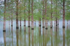 Überschwemmte Baumlandschaft am Frühjahr Glattes Wasser Stockfoto