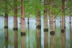 Überschwemmte Baumlandschaft am Frühjahr Glattes Wasser Lizenzfreie Stockbilder