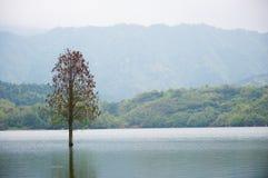 Überschwemmte einsame Baumlandschaft am Frühjahr Glattes Wasser Lizenzfreie Stockbilder