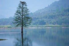 Überschwemmte einsame Baumlandschaft am Frühjahr Glattes Wasser Stockfotos