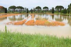 Überschwemmte Felder nach Regenflut Stockfoto