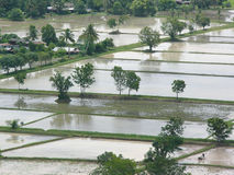 Überschwemmte Paddyfelder Stockfotografie