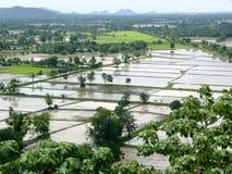 Überschwemmte Paddyfelder Stockfotos
