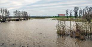 Überschwemmte Polderlandschaft in den Niederlanden Lizenzfreies Stockfoto