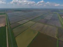Überschwemmte Reispaddys Landwirtschaftliche Methoden des Anbauens des Reises auf den Gebieten Stockbilder