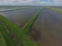 Überschwemmte Reispaddys Landwirtschaftliche Methoden des Anbauens des Reises auf den Gebieten Stockbild