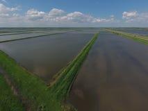 Überschwemmte Reispaddys Landwirtschaftliche Methoden des Anbauens des Reises auf den Gebieten Lizenzfreie Stockfotografie