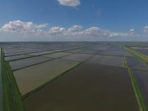 Überschwemmte Reispaddys Landwirtschaftliche Methoden des Anbauens des Reises auf den Gebieten Lizenzfreies Stockfoto
