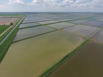 Überschwemmte Reispaddys Landwirtschaftliche Methoden des Anbauens des Reises auf den Gebieten Stockfoto