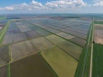 Überschwemmte Reispaddys Landwirtschaftliche Methoden des Anbauens des Reises im f Stockbilder
