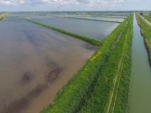 Überschwemmte Reispaddys Landwirtschaftliche Methoden des Anbauens des Reises im f Stockfotografie