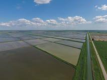 Überschwemmte Reispaddys Landwirtschaftliche Methoden des Anbauens des Reises im f Stockbild